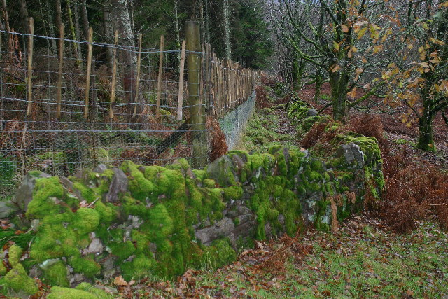 Old stone wall on Knockour Hill