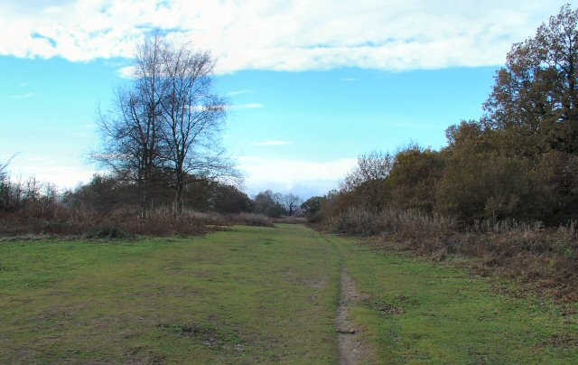 Ridge leading to W Top of Park Hill, Reigate Abbey Park, Surrey