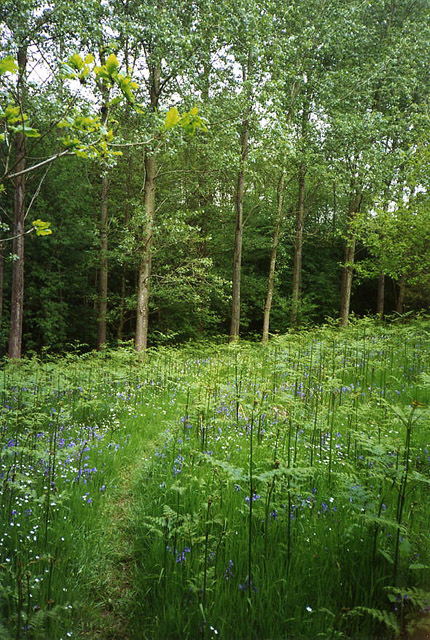 Compton Dando: Lord�s Wood