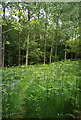 ST6363 : Compton Dando: Lord's Wood by Martin Bodman
