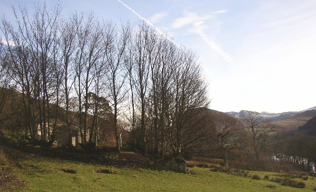 Coppiced trees at Miresyke, Loweswater