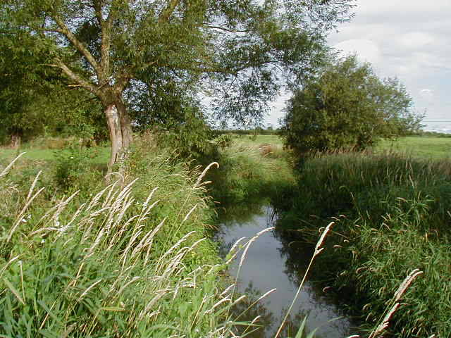 The stream near Mill Farm, Bulkington