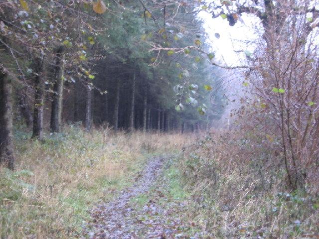 Howgill Wood.