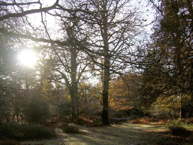 Autumn in Brinken Wood, New Forest