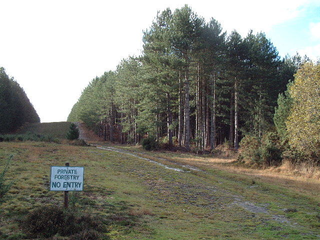Broad Marsh Wood