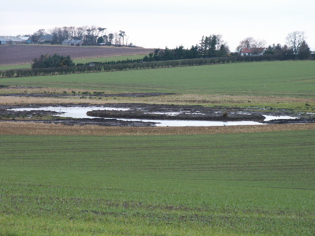 New wetlands by Lochend