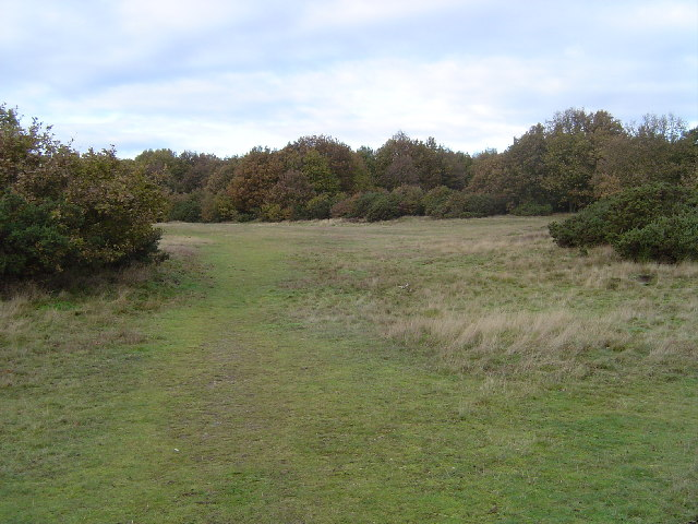 Nomansland Common