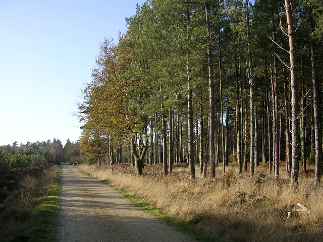 Cycle path through the Poundhill Inclosure, New Forest