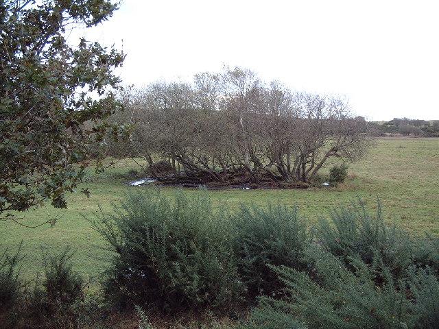 Stoborough Heath