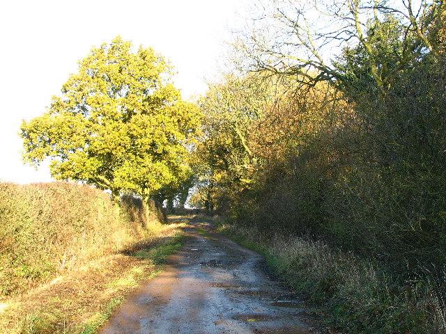 Ingoldsby Wood.