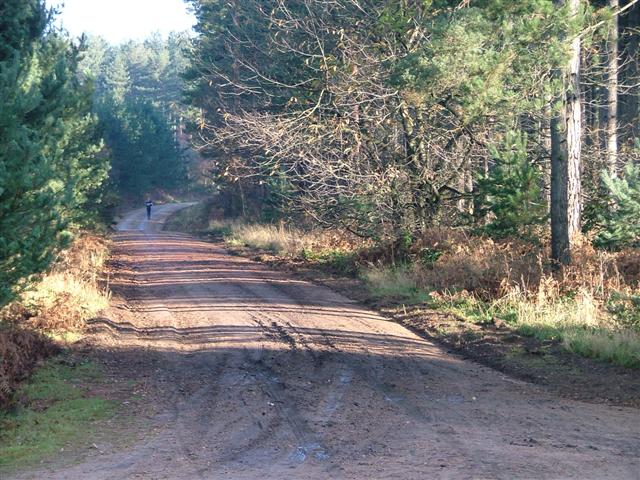 Forest Road, Clipstone Forest