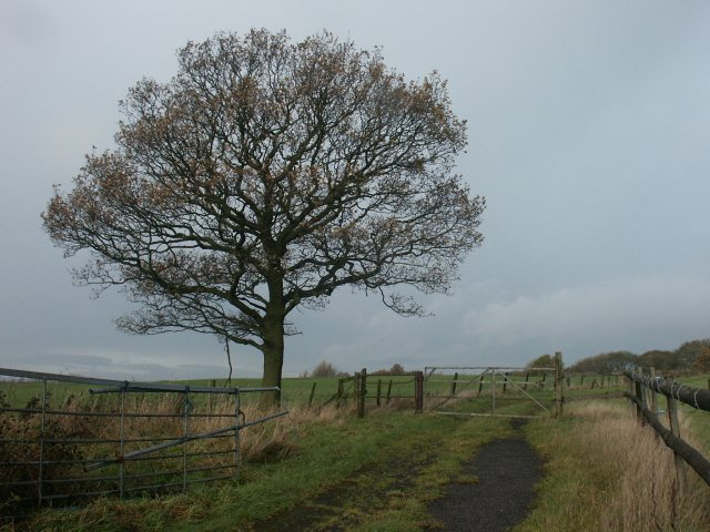 Tree and track, Kirkby in Ashfield
