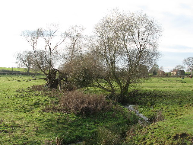 Walcot Willows.