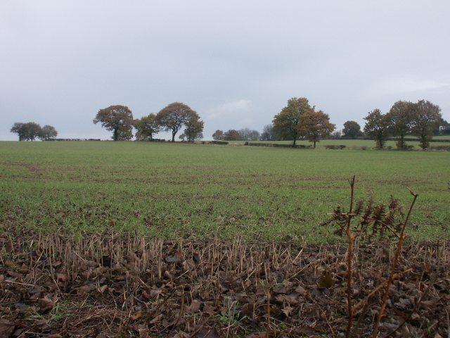 Fields, Selston