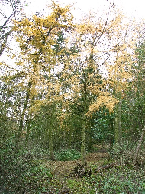 Braceby Woodland