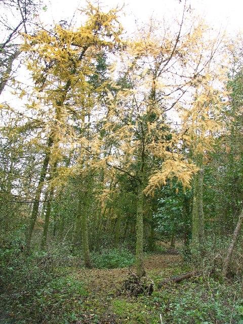 Braceby Woodland
