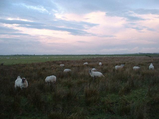 Cockerham Marshes