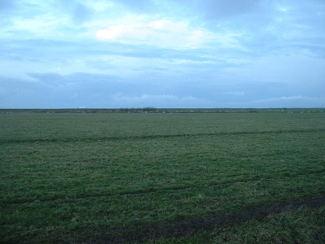Cockerham Marshes