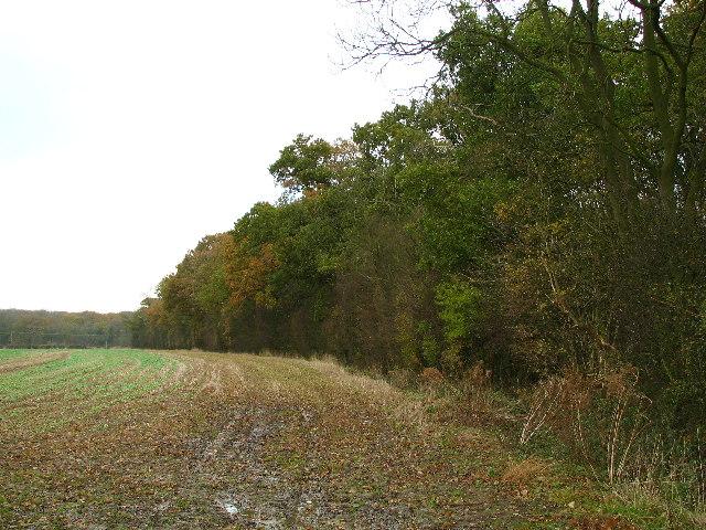 Edge Of Pickworth Wood.