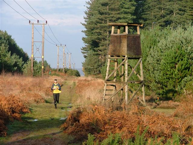 Tower, Clipstone Forest