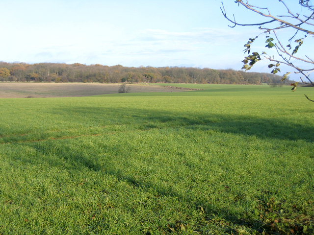Sutton Wood and farmland, Upton, Peterborough