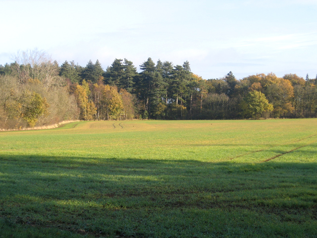 Southey Wood, Ufford, Peterborough