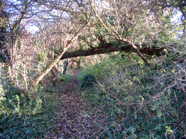 Woodland path, Maxey, Peterborough