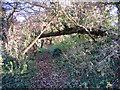 TF1007 : Woodland path, Maxey, Peterborough by Rodney Burton