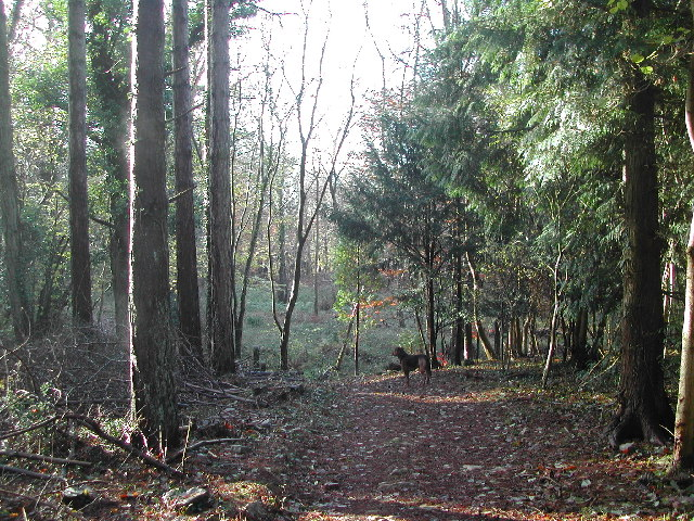 King's Wood - typical scenery