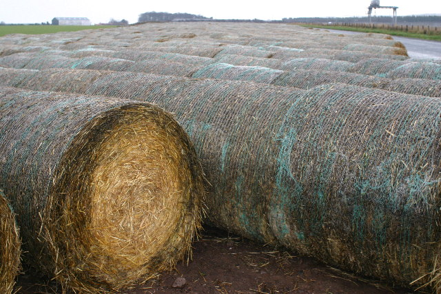Bales near East Barns