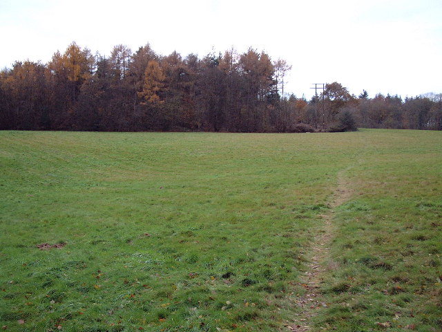 Pitlands Wood