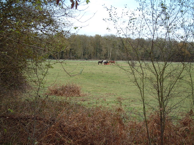 Field from Welders Lane