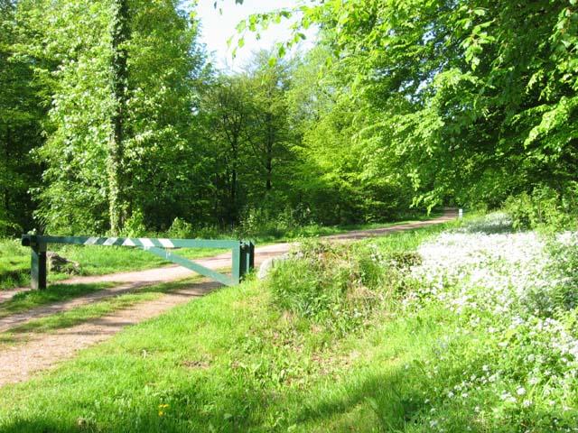 entrance to Fforest Fawr