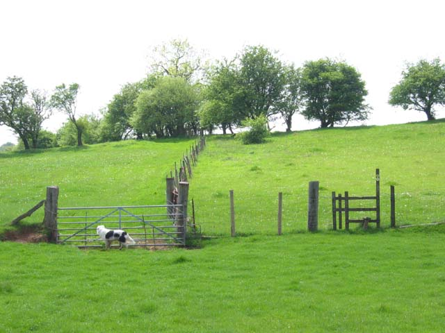 Fields near Thornhill and the 'Black Cock' Inn