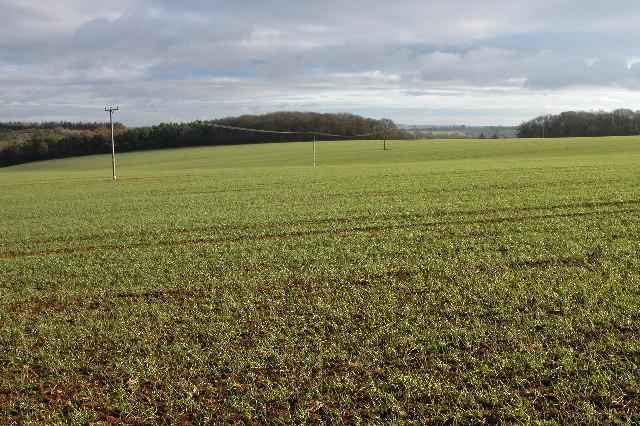 Granham Plantation and Hawling Grove