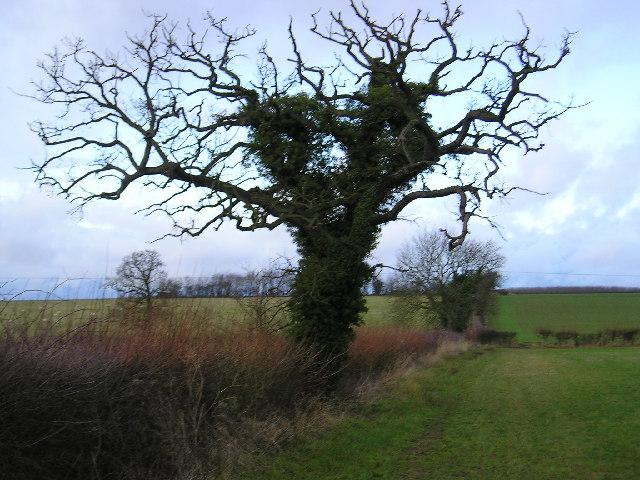Tree and Hedge