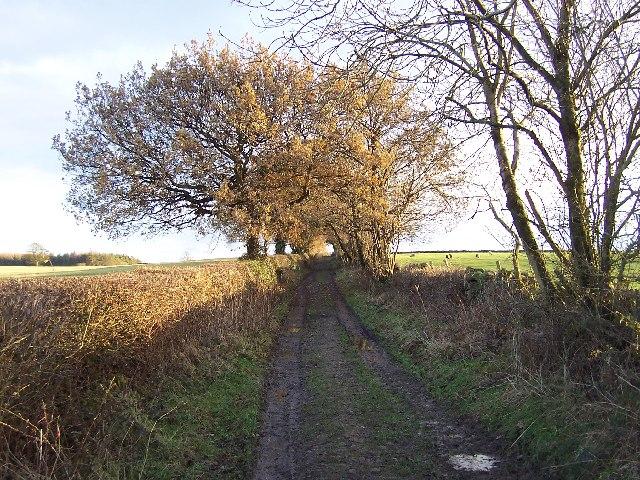 Westhood Lane