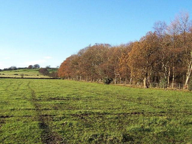 Paley's Plantation