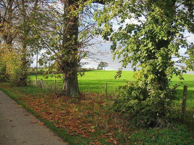 Waddesdon Hill
