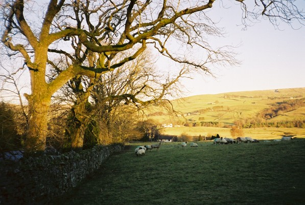 Pasture at Ghyll House