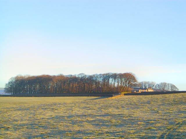 Castlegate Stud Farm