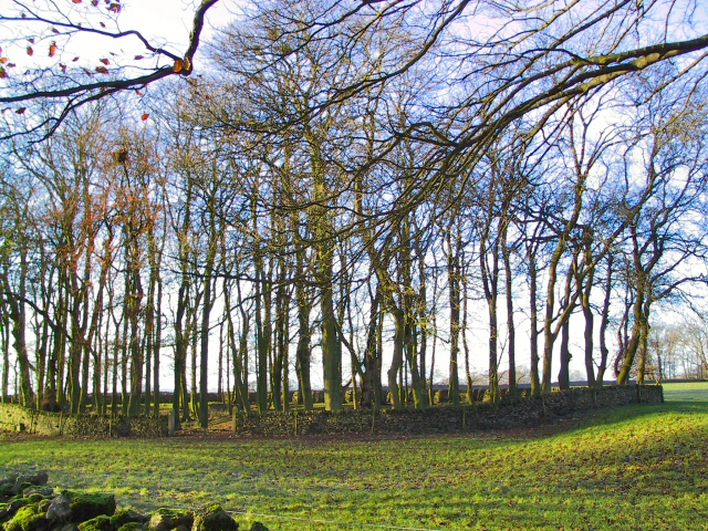 Walled Copse