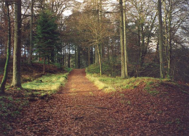 Track in the Drumlanrig  Woods