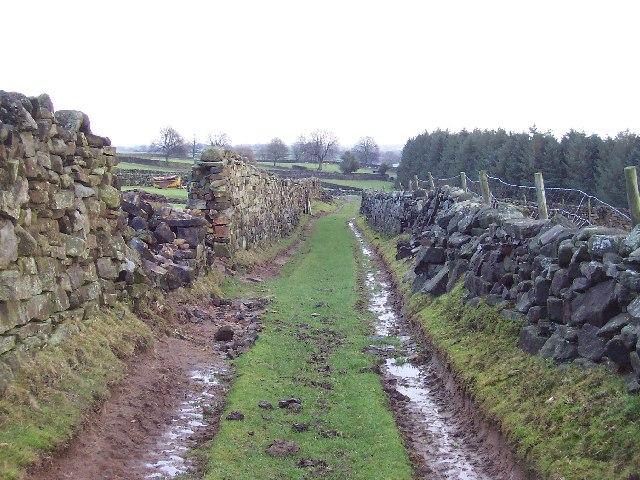 Green Lane near Carlesmoor House Farm