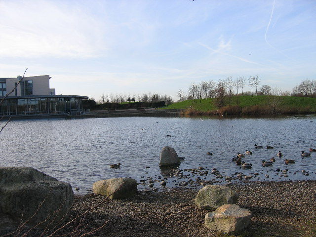 Swan Lake, Harmondsworth Moor, Middlesex