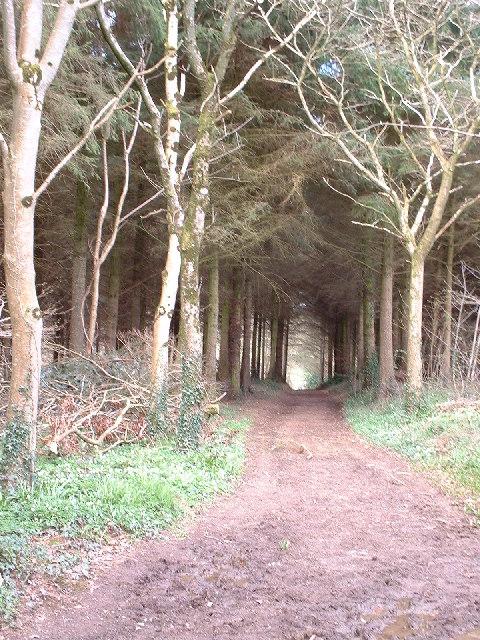 Morchard Wood