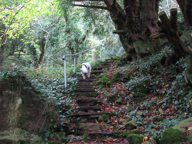 '365 Steps' to the Wyndcliffe