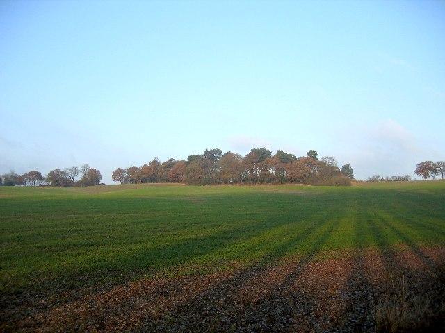Brown's Green Wood