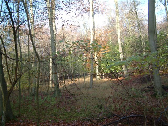 Maidensgrove Wood