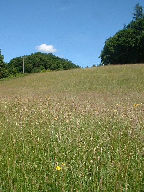 Meadow by the River Tamar